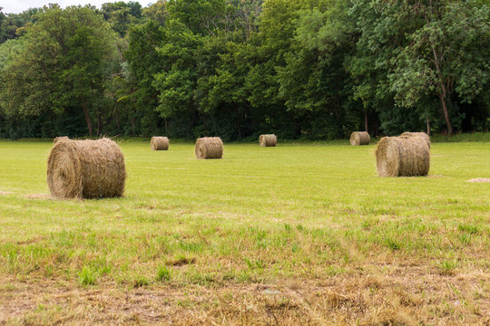 Bottes de foin dans un champs en été