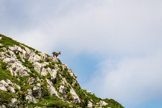 Silhouette d'un chamois sur une crête en montagne