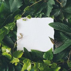 Wall Mural - Creative arrangement made with natural spring leaves with paper card note. MInimal flat lay background.