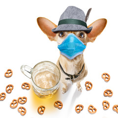 bavarian beer chihuahua dog in coronavirus time
