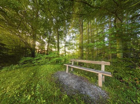 Bank im Wald bei Sonnenuntergang