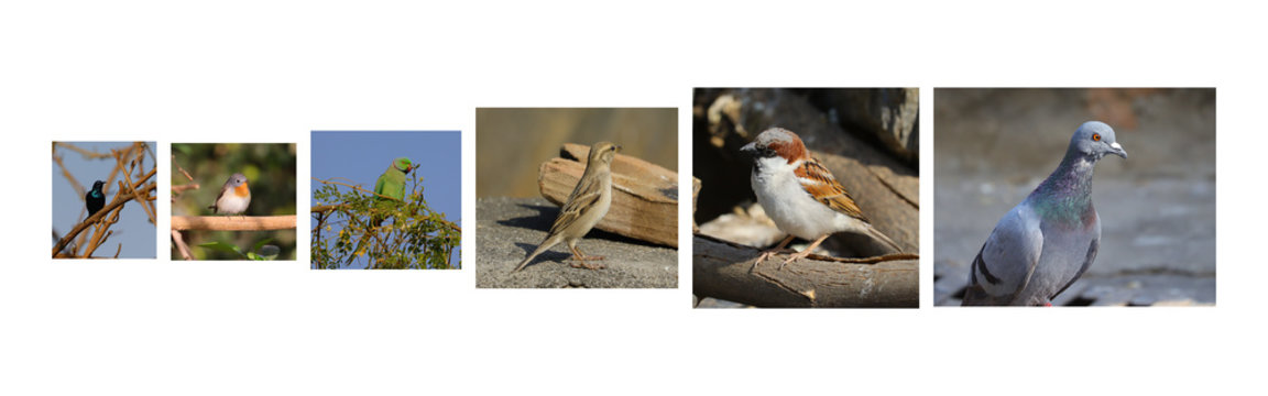 Different types of birds images