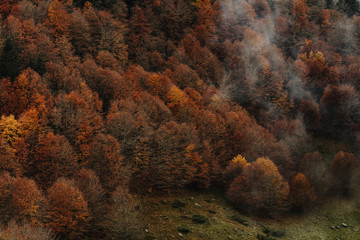 Landscape photography of autumn trees with fog, as abstract texture