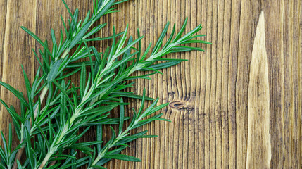 Green rosemary plant on a wooden table.