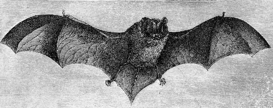 Illustration of the Batin the old book Encyclopedic dictionary by A. Granat, vol. 8, S. Petersburg, 1903