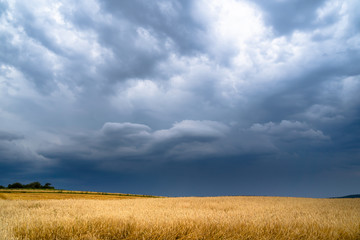 Dramatic storm clouds timelapse over rye fields. Country landscape of the hurricane. Very windy weather. Plain field of wheat against the background of dark sky Fotobehang
