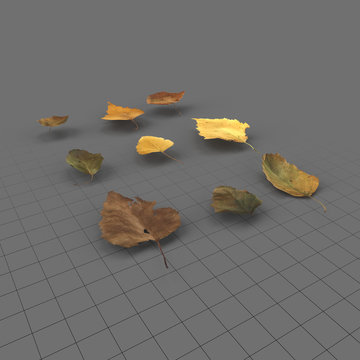 Dry birch leaves