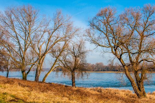 0199  Zons - Landschaft am Niederrhein