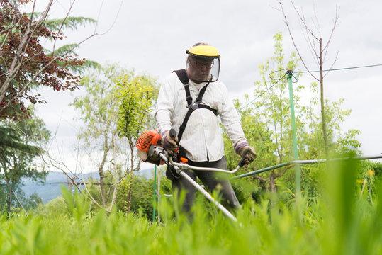 Mature man cutting grass with gasoline machine in farm