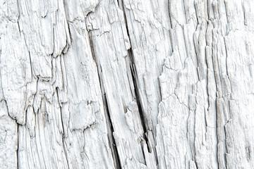 Texture of a driftwood with deep longitudinal cracks