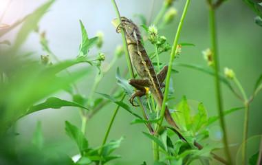 Papiers peints Jardin Oriental garden lizard (Calotes versicolor) - Garden lizards are relaxing on tree branches, camouflage garden lizards. Close up chameleon details.