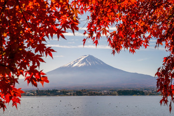 Mt. Fuji in autumn with red maple leaves