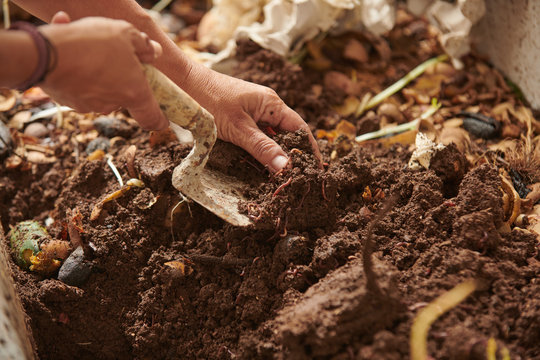 Anonymous crop farmer with garden trowel taking soil with worms from compost pile in countryside