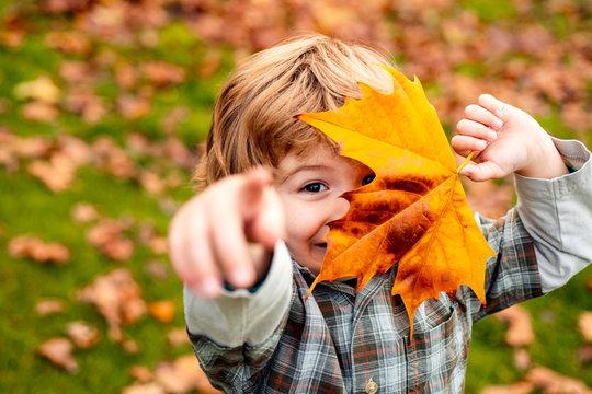 Autumnal mood. Little child boy in autumn orange leaves, outdoor.