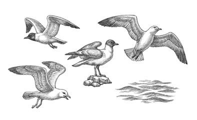 Hand drawn illustration, sea gulls and waves, set.