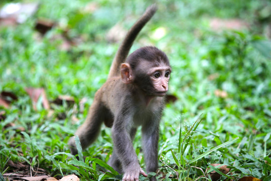 Cute monkey a cute monkey lives in a natural forest
