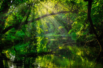 morning sun rays in green forest by the river