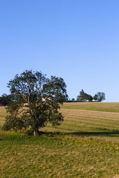 A tree in a field near Wold Newton in the Lincolnshire Wolds.