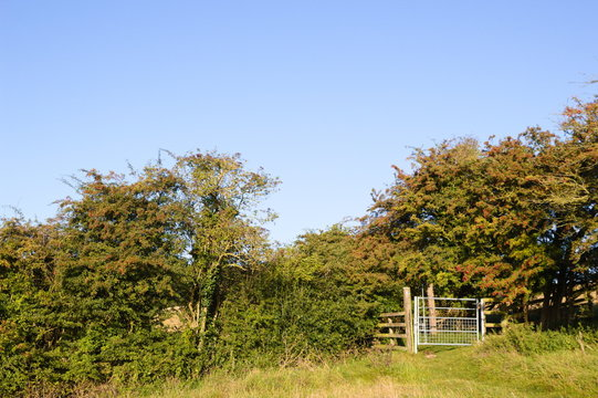 Bridleway gate in a grassy field near Wold Newton in the Lincolnshire Wolds.
