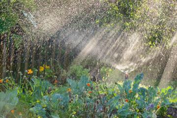 Bewässerung - Gegenlicht - Wassersprüher im Gemüsegarten