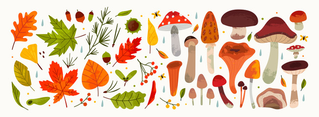 Hand drawn Big Vector set of various types of Mushrooms and Autumn leaves, rowan, acorn and chestnut. Colored trendy illustration. Flat design. Stamp texture. All elements are isolated on white