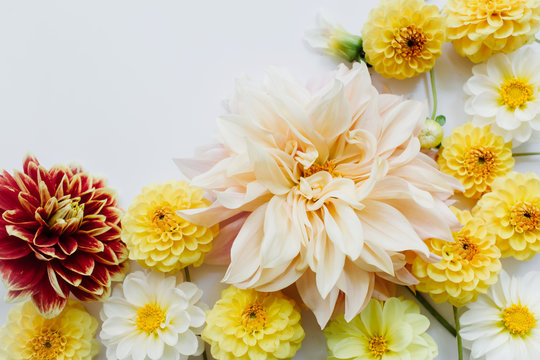 Yellow, white, red flowers dahlias on white background. Flowers composition. Flat lay, top view, copy space. Summer, autumn concept.