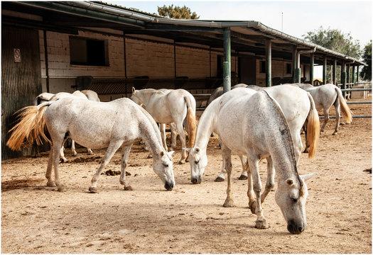 Farm with horses