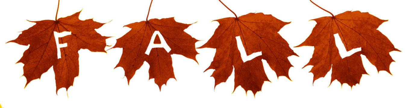 four 4 Big maple leaves  with cutted out word FALL isolated on white background