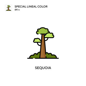 Sequoia Special lineal color icon. Illustration symbol design template for web mobile UI element. Perfect color modern pictogram on editable stroke.