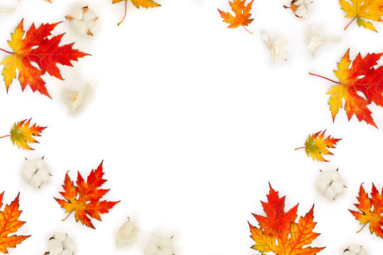 Autumnal frame of maple leaves, cotton flowers, dry white flowers orchid on white background with space for text. Top view, flat lay