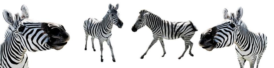 Printed kitchen splashbacks Zebra Zebras White Isolated Background Wild Animals Cut Out