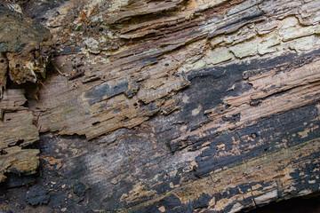 Grungy tree bark texture background