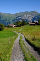 Track and alpine meadows, Axalp, Switzerland