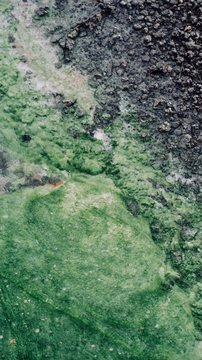 Abstract Green Natural Spring with a Dark Grey Rocky Edge