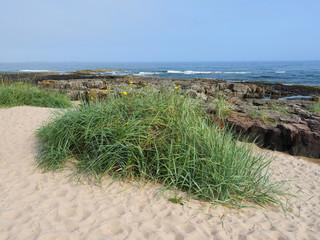 Sand dunes on Lindisfarne Island