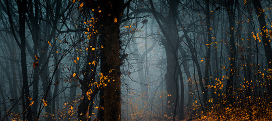 Mysterious fall forest. Footpath in the beautiful, dark, fairy, foggy, autumn, mysterious forest, among high trees with yellow leaves.