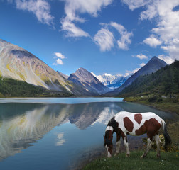 Tourism in Altai, Russia. Horse by the lake. Belukha Mountain is reflected in the waters of Lake Akkem.