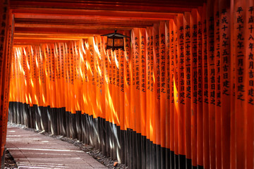 Sunlight playing across the red torii gates at Fushimi Inari