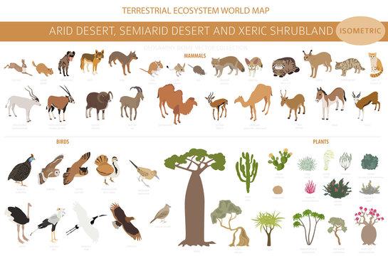 Desert biome, xeric shrubland biome, natural region infographic. Terrestrial ecosystem world map. Animals, birds and vegetations isometric design set