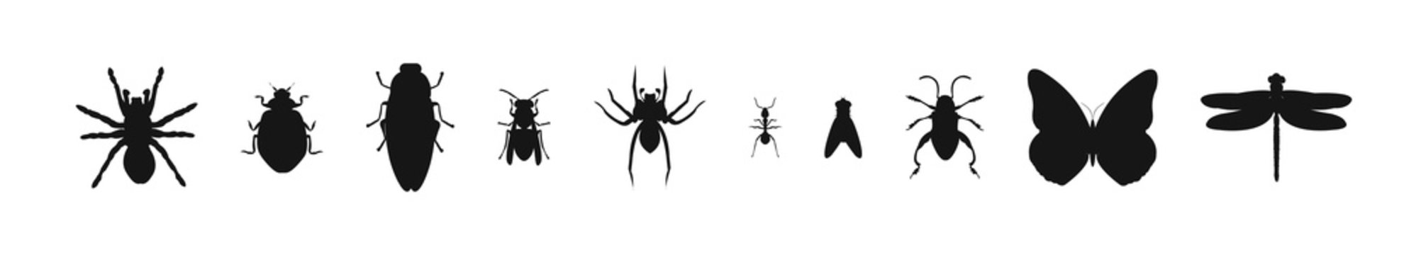 Insect silhouette icon collection on white background. Spider beetle and mosquits set.