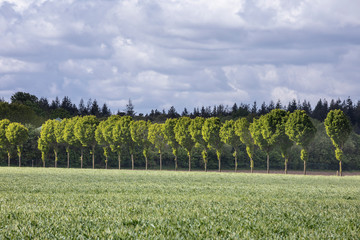 green row of trees on sunny day