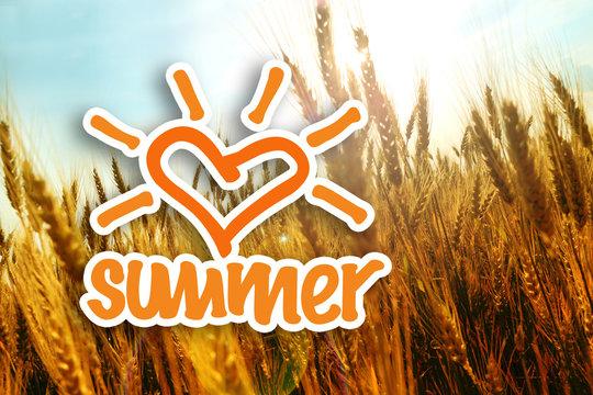 Grain field in the summer