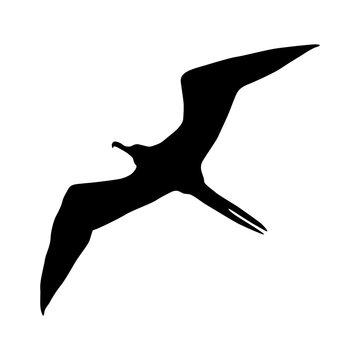 Frigatebird (Fregata) Silhouette Found In Map Of Pacific & Atlantic Oceans