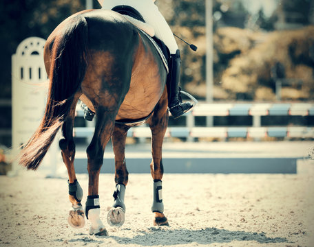 Equestrian sport. Overcome obstacles.