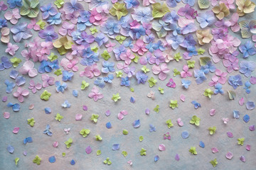 Decorative background with colored hydrangea flowers