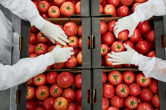 Skilled warehouse workers packaging vegetables for shipping