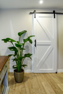 Modern living room with a white sliding barn door and a beautiful potted plant called Bird of paradise (Strelitzia reginae)