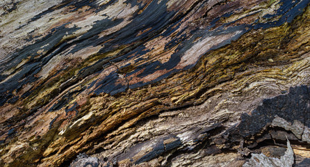 texture of bark of a rotting tree