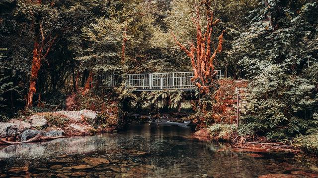 Gourgues d'asque pont orange