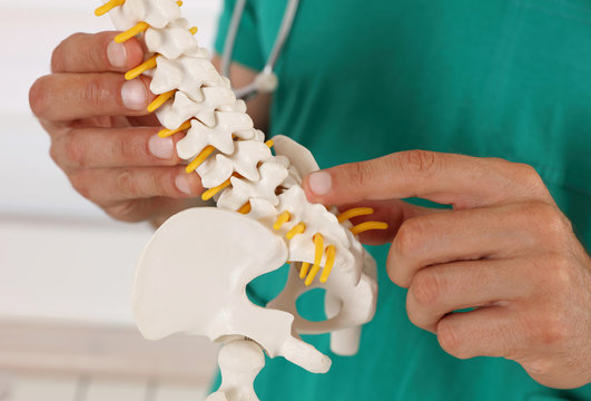 Back pain relief concept. Doctor chiropractor explains causes of back pain lumbar spine disk model